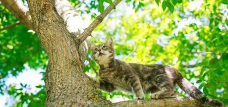 De kat: binnen of buiten?