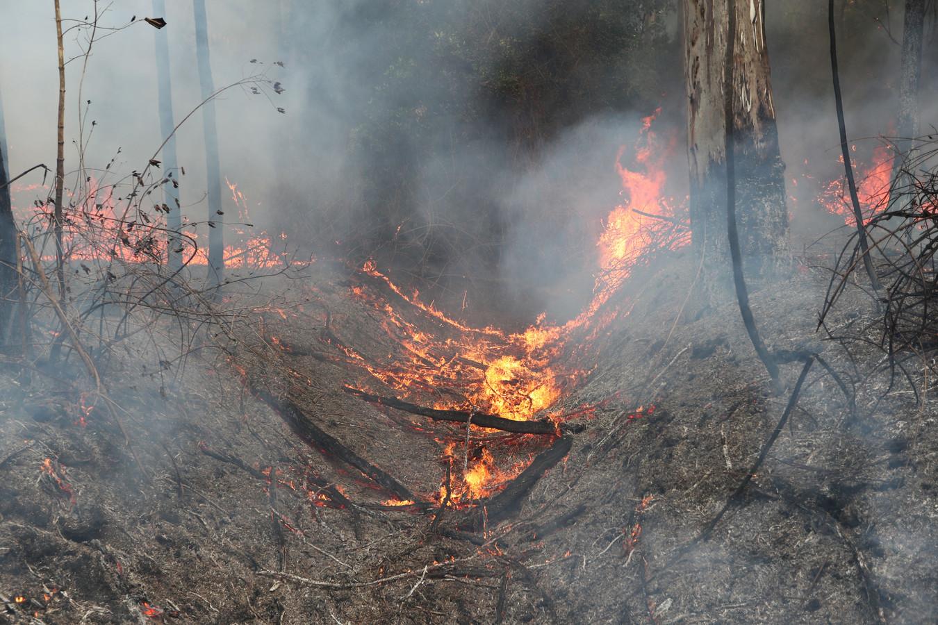Het is zo droog, dat rekening wordt gehouden met een lang bosbrandseizoen.