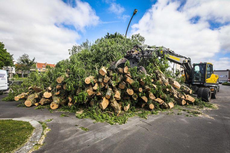 500 bomen worden gerooid. De volgende jaren komen er ongeveer 1.000 bij in Blankenberge.