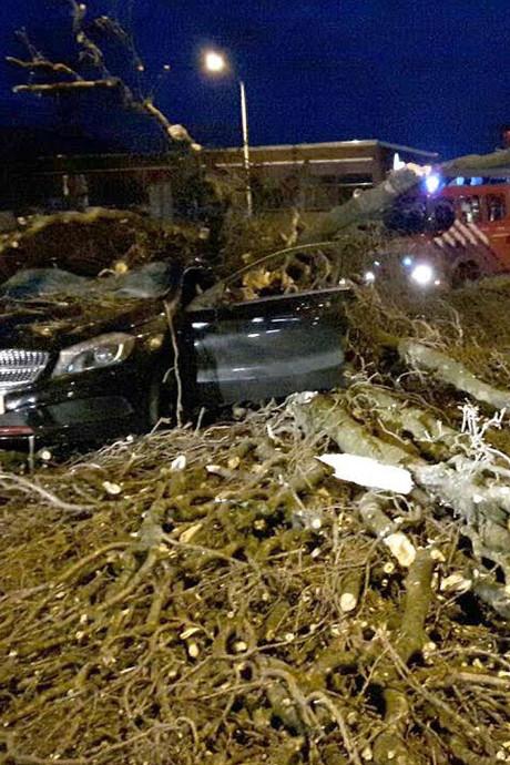 Storm: vrouw gewond door boom op auto in Eindhoven en vertraging op A2 door omgewaaide bomen