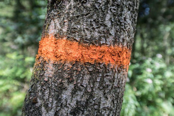 Een deel van de bomen langs de Koekoekendijk tussen Moerdijk en Zevenbergen kampt met essentaksterfte.
