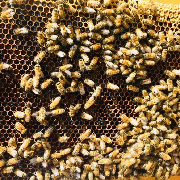 Honingbijen Beeld Margriet Oostveen OPINIE