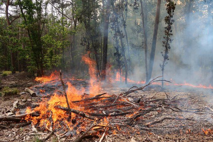Korte felle bosbrand Oosterhout