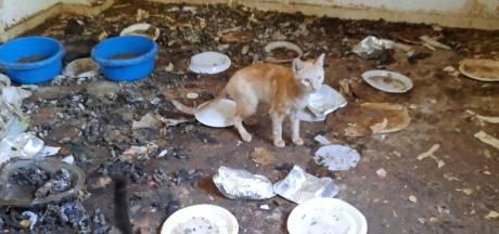 Houdverbod na verwaarlozing dieren Koewacht