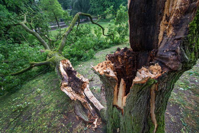 Veel bomen raakten op 4 juni zwaar beschadigd door de storm.