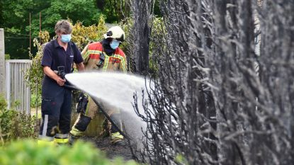 Onkruid wegbranden, loopt uit de hand: flinke haag gaat in vlammen op