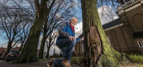 Jong Flevoland heeft erelijst met slechts 8 bomen