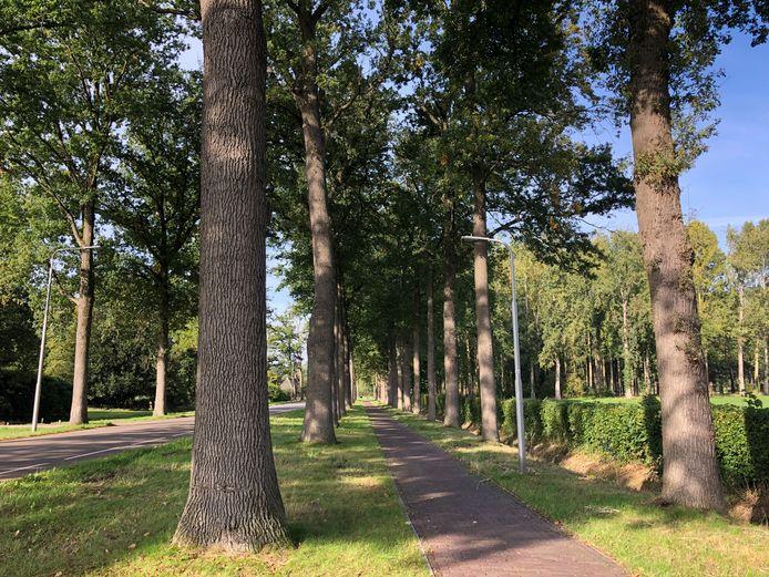 Blik op de  Lemierkesdreef vanaf de Schoorstraat nét voorbij ASVZ/Vincentius. Deze laan verdwijnt en maakt plaats voor jonge bomen.
