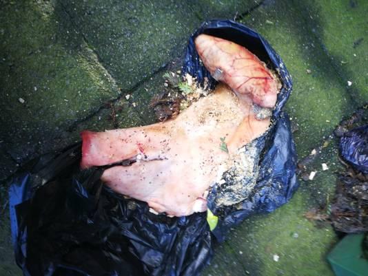 De varkenskop die vannacht bij het huis van Djade Muit door de voorruit is gegooid.