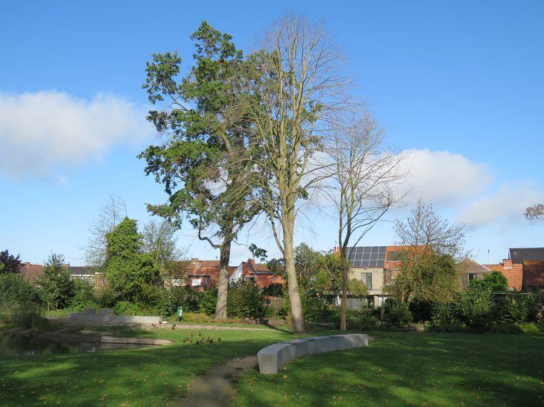 Een foto van enkele maanden geleden toont duidelijk dat enkele bomen in Park Vande Walle afgestorven zijn.