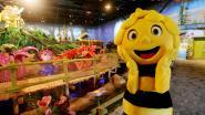 Plopsa investeert in een indoorpretpark rond Maya de Bij in het Tsjechische Praag