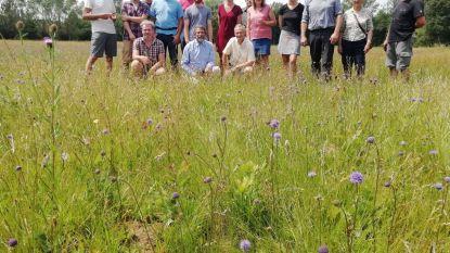 Provincie geeft 430.000 euro aan redden van bedreigde planten en biodiversiteit