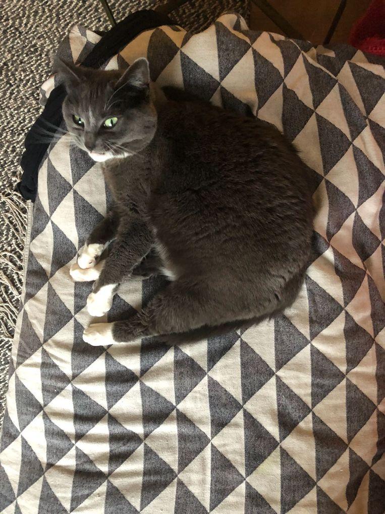 Takkie, de kat van oprichter Job Beeld