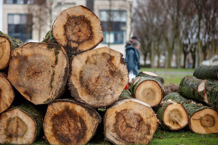 Langs het fietspad langs de Vlaamse Schuur in Etten-Leur zijn afgelopen maandag 23 populieren gekapt omdat volgens de gemeente de wortels het fietspad omhoogdrukten en ze de groei van andere bomen belemmerden.