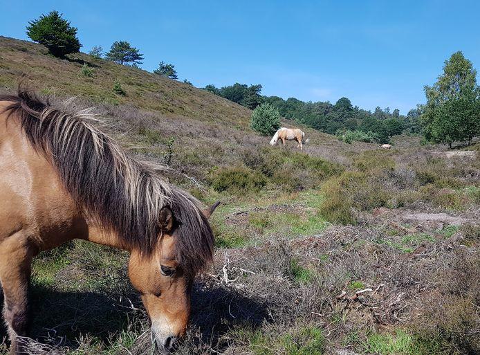 Een paard op de Posbank.
