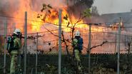 100 duiven sterven in brand