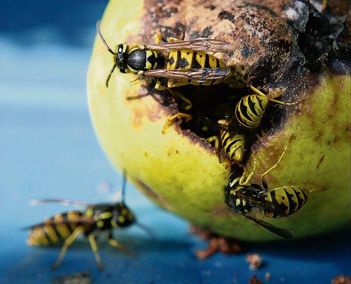 Een rottende peer, dat vinden wespen veel lekkerder dan uw glas cola.