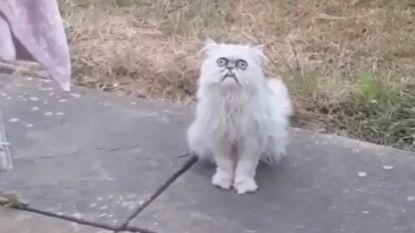 VIDEO. Griezelig kijkende kat gaat viraal nadat komiek filmpje post op Instagram