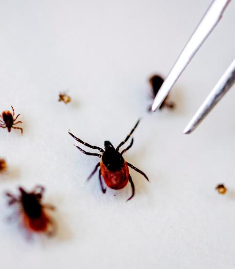 Wageningse onderzoekers testen 15.000 teken op gevaarlijk virus