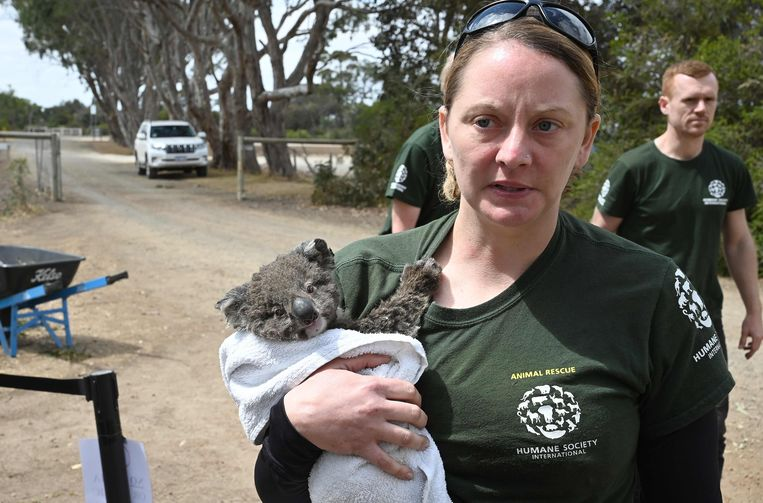 Kelly met een ander dier dat kon gered worden, een nog erg jonge babykoala.