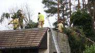 Zware boom valt op dak van magazijn
