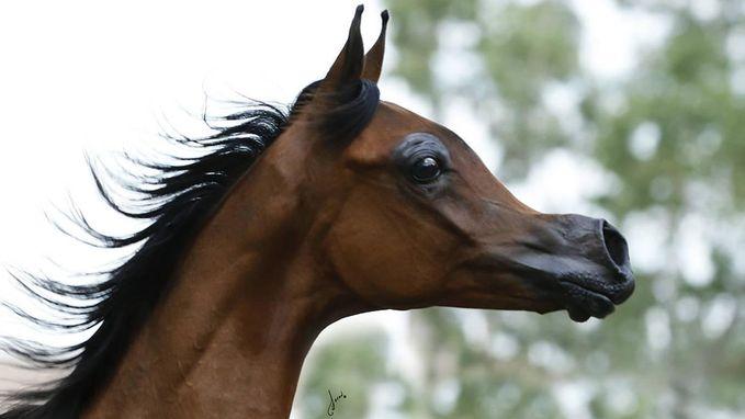 """Disney genoeg voor u? Experts trekken aan alarmbel rond """"afschuwelijke"""" fokpraktijken bij paarden"""