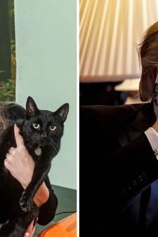 Nieuws gemist? Commotie om Arnhemse 'catnapper'   Nederlander hackt Twitteraccount Trump