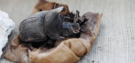 Archeologen vinden gemummificeerde mestkevers en katten in praalgraven