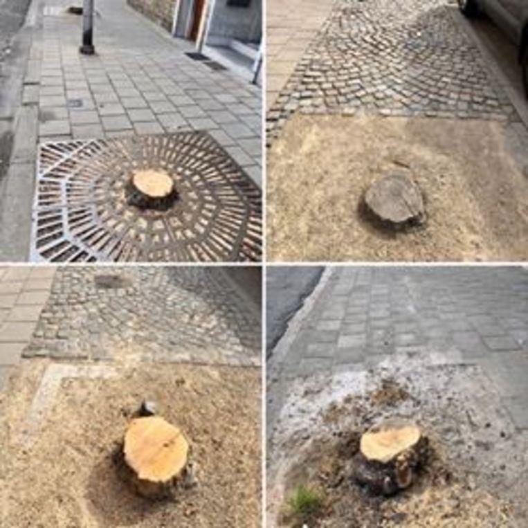 Acht bomen werden door de Groendienst omgekapt