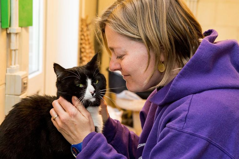 Poezenknuffelaar Sofie is dol op de katten.