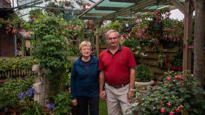 Bloemenpracht in 't Voskeshof: meer dan 500 fuchsia's en tips voor groene vingers