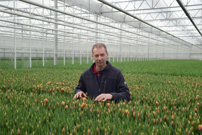 Jan Boot uit Kerkwerve tussen zijn tulpen. De medewerkers werken nog steeds door alhoewel veel tulpen tot compost worden vermalen.