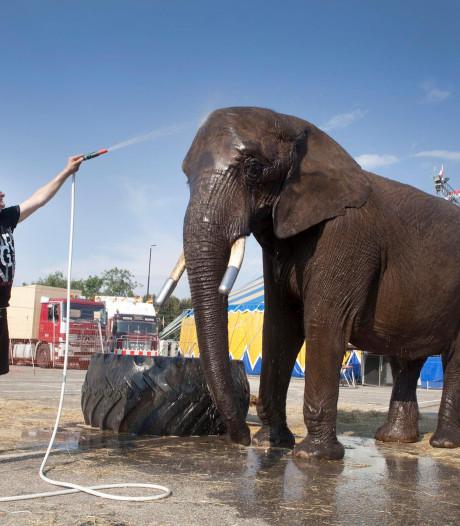 Circus Freiwald: 'Buba is niet ontsnapt, maar aan de wandel'