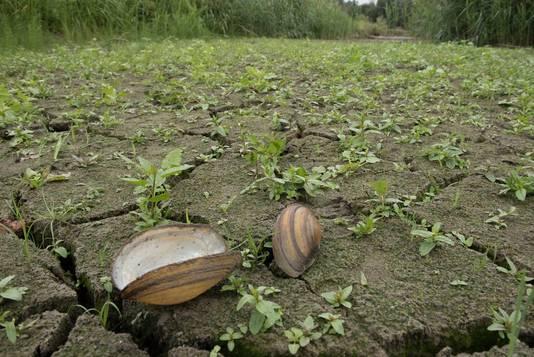 Sommigen delen van het moerasgebied liggen helemaal droog.