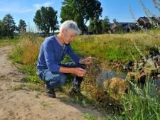 Dit is het natuurlijkste park van Helmond