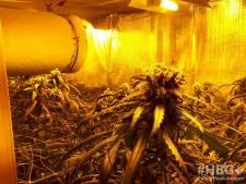 Politie ontmantelt hennepkwekerij in Haaksbergen