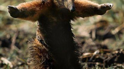 Foto van verbrande miereneter in Amazone gaat viraal: de waarheid achter het beeld dat de wereld beroert