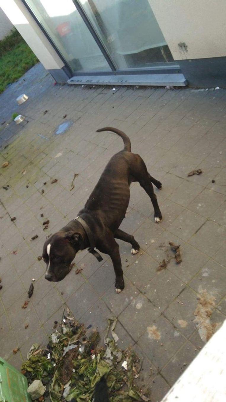 De honden werden in beslag genomen door de politie.