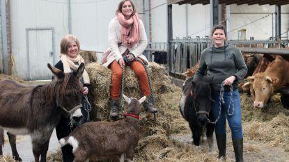 Kempische landbouwers stellen boerderij open voor mensen met een burn-out