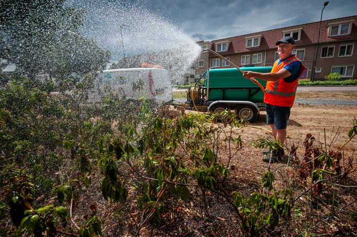 Toine Jansen sproeit op verzoek van de gemeente rododendrons in het Prins Hendrikpark.