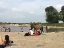 Paarden verjagen zonnebaders: 'Hij zat anderhalf uur lang bovenop mijn handdoek'