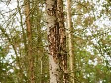 De eerste twee Tiny Forests van Roosendaal komen in de Westrand en in Langdonk