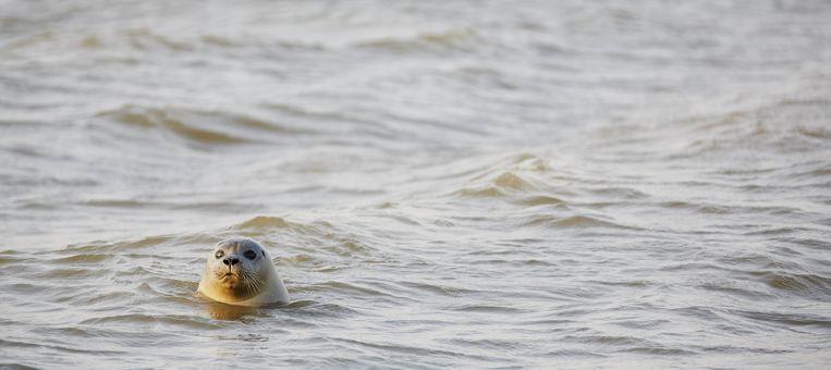 De Waddenzee Beeld anp