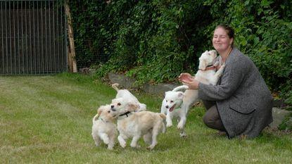Asiel opent vijf nieuwe hondenweides