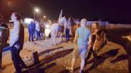 Paard en ruiter gewond na aanrijding