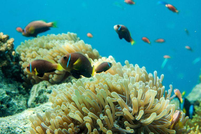 Foto ter illustratie van het Great Barrier Reef.