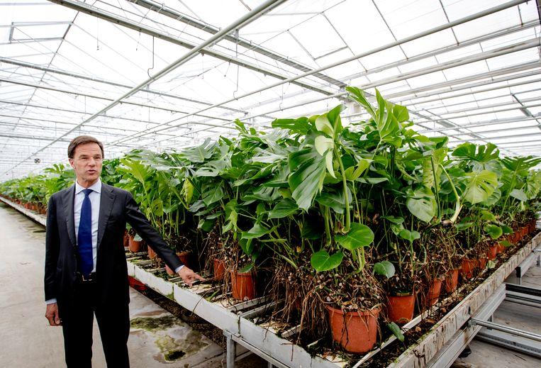 Minister-president Mark Rutte bij MDK planten en decoratie tijdens een werkbezoek aan het Westland. Beeld ANP