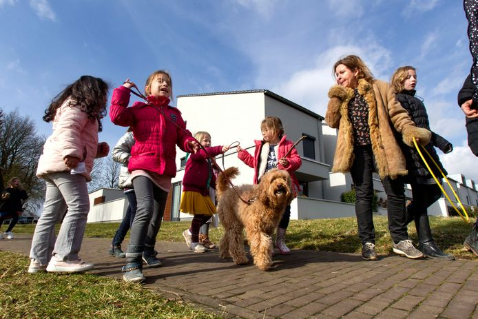De kinderen van basisschool 't Slingertouw in Meerhoven gaan een blokje om met therapiehond Hannes en haar baasje Karin Jonkers.