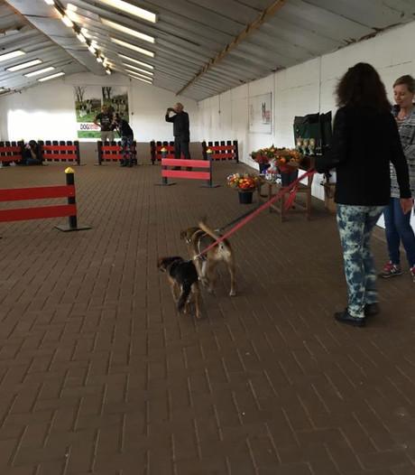 Een tweede kans voor honden zonder ras in Kerkwijk
