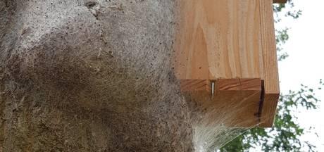 Voorst vinkt mezenproef in strijd tegen rups nog niet af